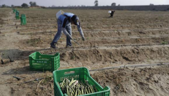 """""""Los afectados directos son los trabajadores pertenecientes al extinto régimen agrario, ya que recibirán menos ingresos en el inmediato"""". (Foto: EFE)"""