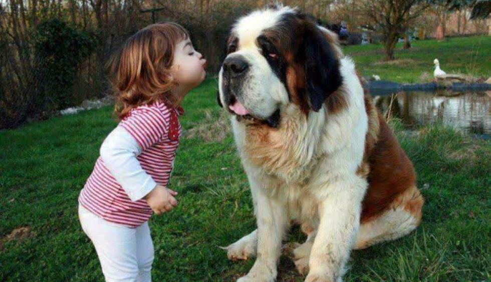 ¿Y quién dijo que el perro solo era el mejor amigo del hombre? (lainformacion.com)