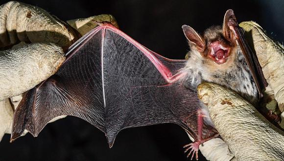 Prohíben el consumo de murciélagos en China por coronavirus. (Foto referencial: Getty Images)