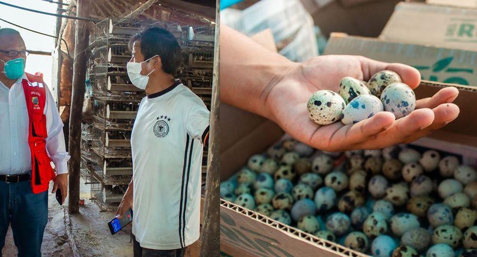 Huevitos de codorniz de productor que iba a regalar a sus codornices son entregados a familias necesitadas de Lurín.