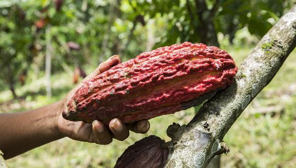 El cacao peruano se sigue abriendo paso en mercados del exterior.