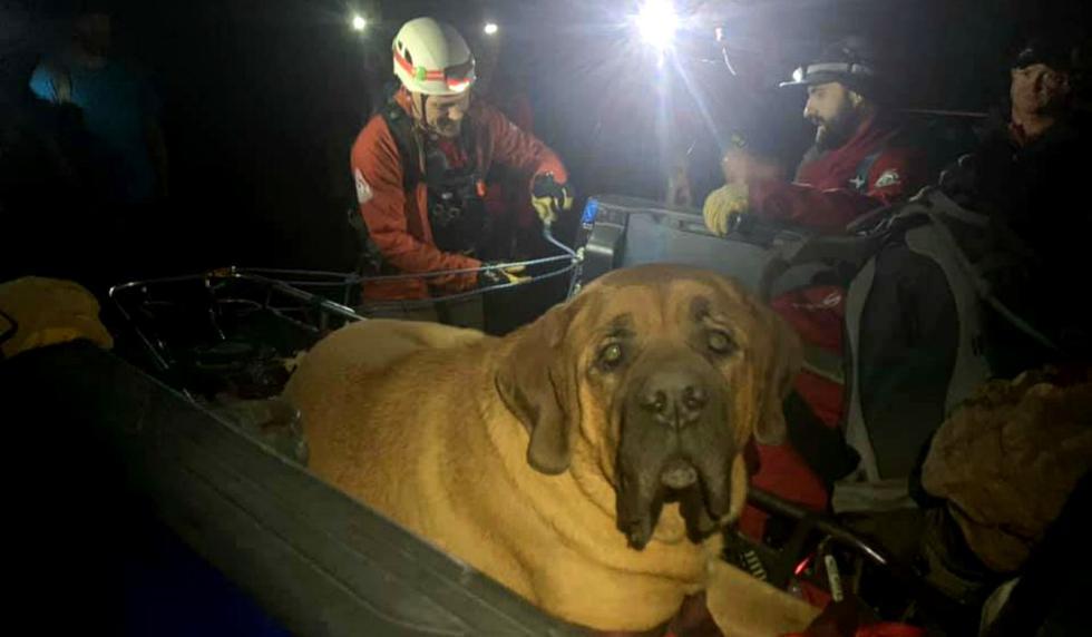 El can salió a dar un paseo con su humano, pero quedó exhausto y no se quiso mover más. (Foto: Facebook/Salt Lake County Sheriff's Search and Rescue)