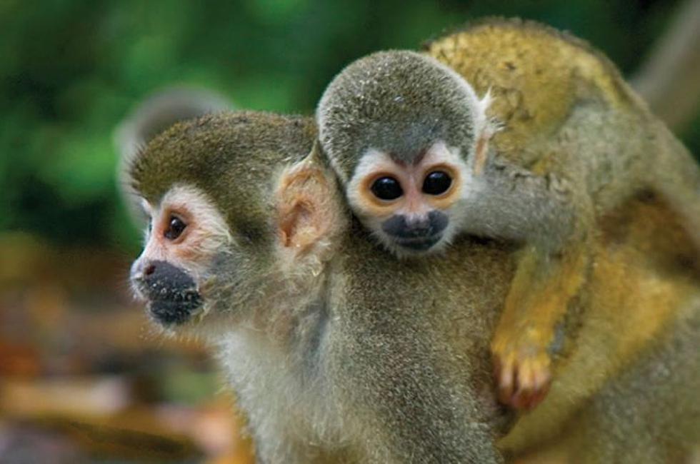 Serfor: Mas de 10 mil especies de fauna silvestre fueron rescatadas del tráfico ilegal. (Serfor)