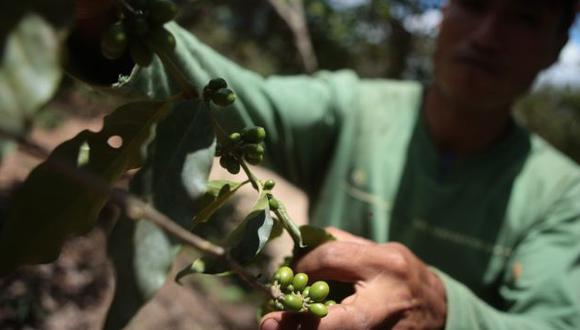 Se distribuirá fertilizantes entre los agricultores afectados por la plaga. (Rafael Cornejo)