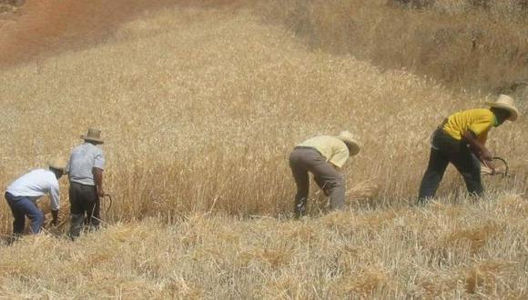 Habrá más producción de trigo. (Cortesía)