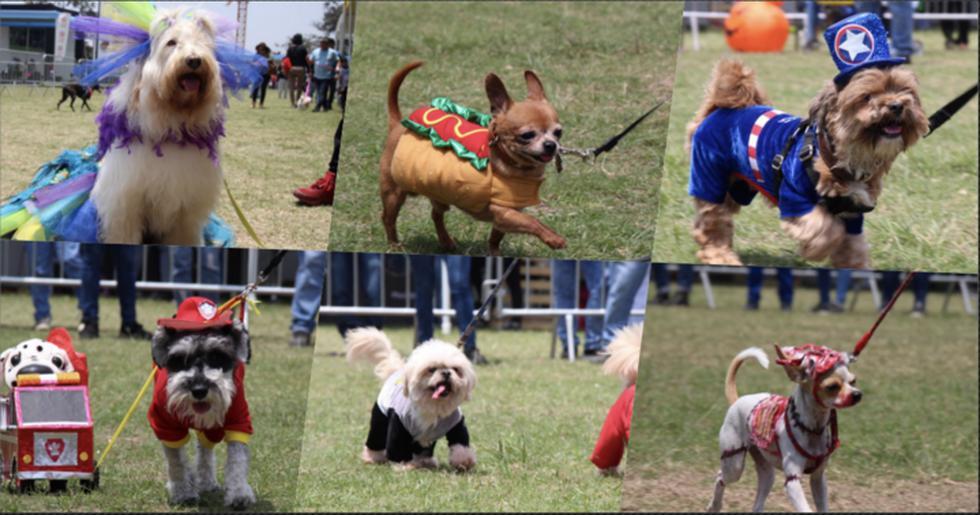 Más de cien mascotas fueron disfrazadas en desfile por Halloween. (Foto:UAP)