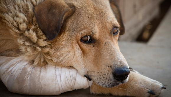 Según el documento, la PNP está obligada todas las denuncias por maltrato animal que se presenten en sus entidades. (GEC)