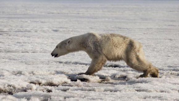 ONU | Las Naciones Unidas advierten que los humanos aceleran la extinción de otras especies. (AP)