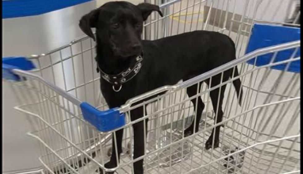 El personal del centro comercial instó a la familia de esta perrita comunicarse de manera inmediata con la tienda. (Foto: María Del Pilar Guibovich)
