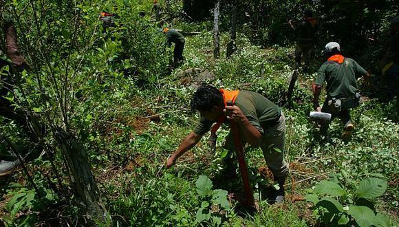 El Perú redujo zona de cultivo de coca durante el 2013. (USI)