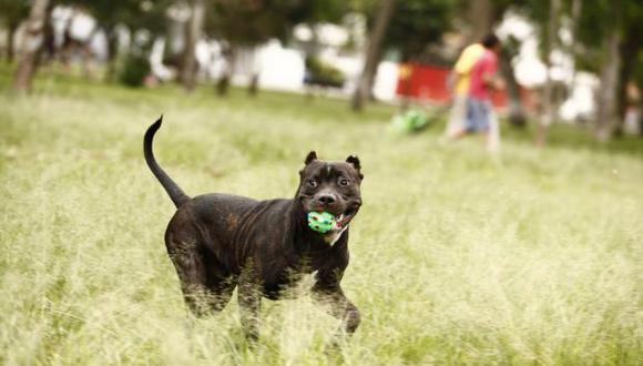 Tiene como objetivo promover el cuidado responsable, adopción de las mascotas y recolección de alimentos para perros de la calle. (Foto: GEC)