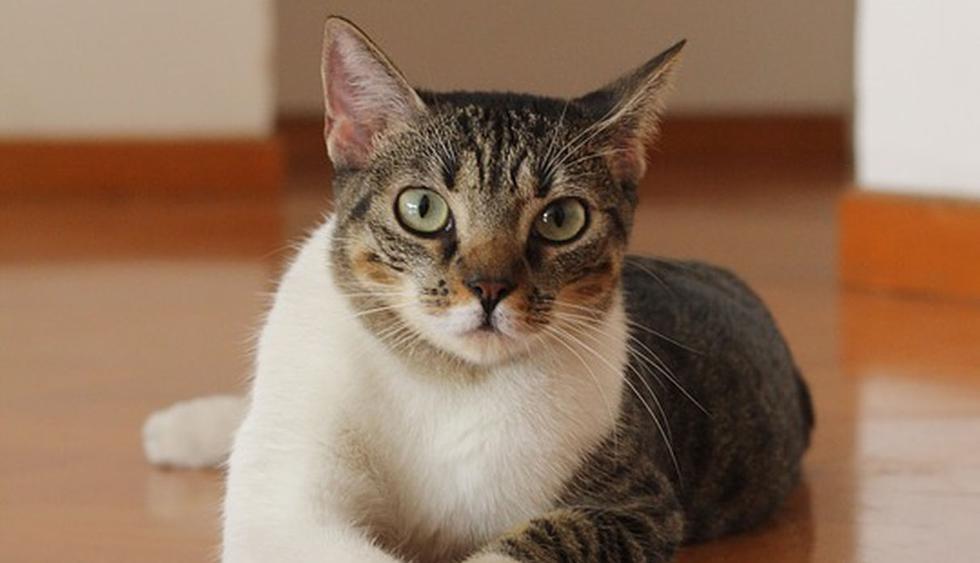 El animal pudo cumplir con su objetivo al no permitir que la frustración se apodere de él. (Pixabay / Corophoto)