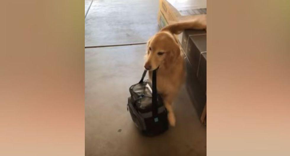 El accionar del perro ha generado diversas reacciones en los usuarios. (YouTube: Caters Clips)