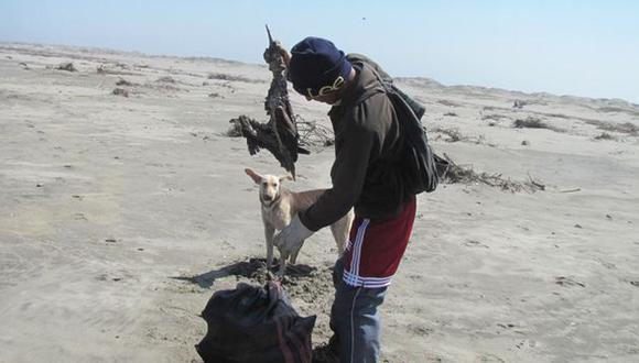 Ejemplares siguen varando muertos en la costa. (RPP)