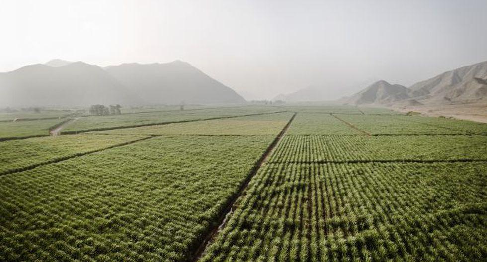 TLC con Australia afectaría a industria azucarera. (USI)