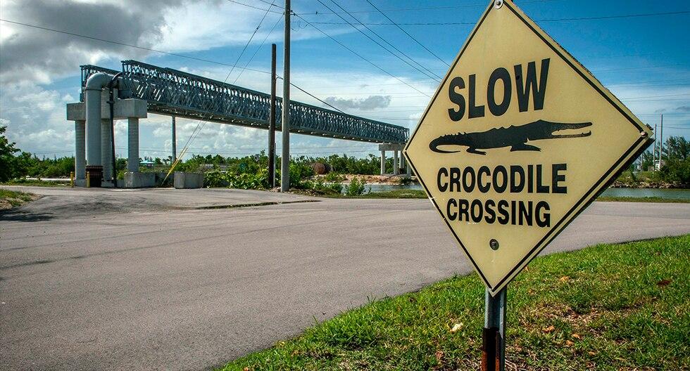 Los canales de enfriamiento de las centrales nucleares de Turkey Point, al sur de Miami, Estados Unidos, son el hábitat de unos 400 cocodrilos americanos. (EFE)