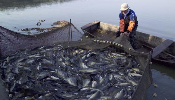 OBJETIVO. Gobierno dice que se busca proteger la pesca artesanal. (Difusión)