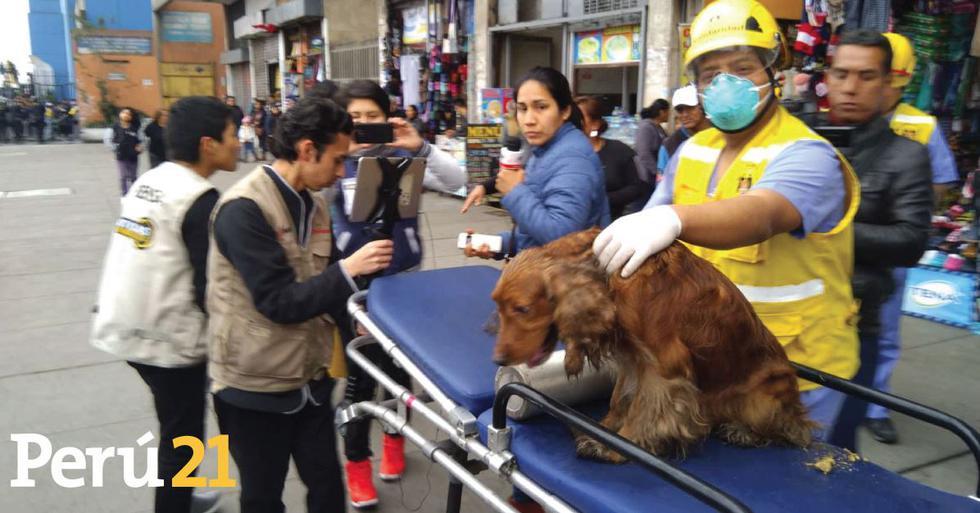 Mascotas fueron rescatadas del incendio en Abancay. (Álvaro Treneman/Perú 21)