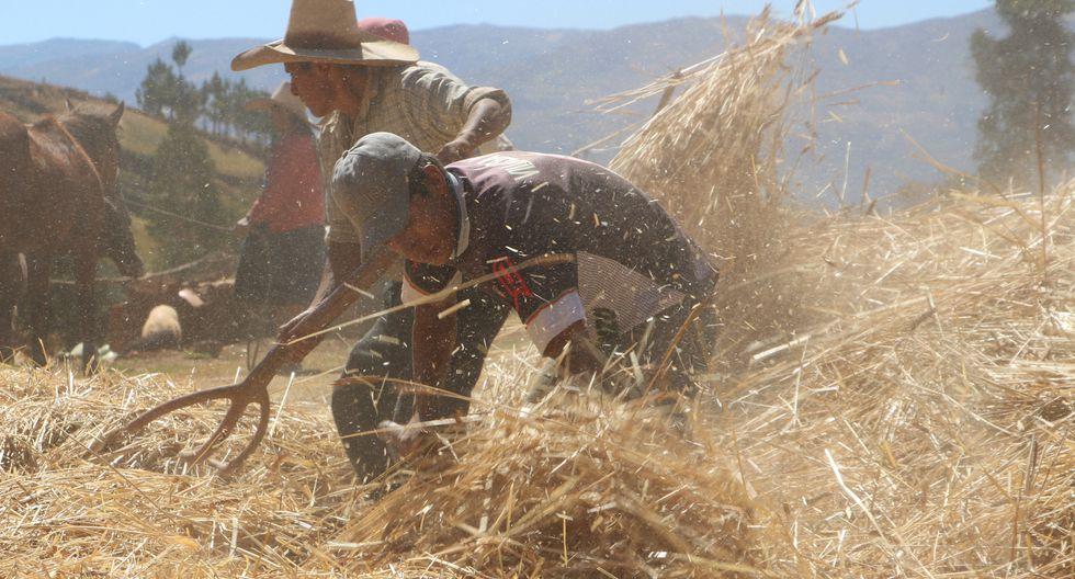 Las importaciones de productos agrícolas han afectado a los productores que no cuentan con subsidios en el algodón, maíz, trigo, entre otros, según Fernando Cillóniz. (Foto: GEC)
