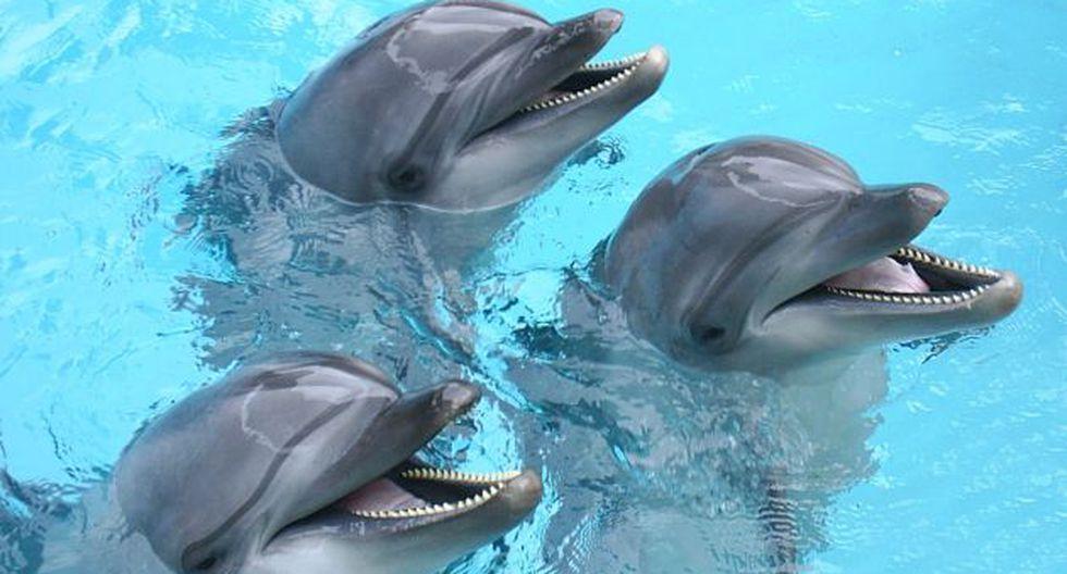 Los delfines saben comunicarse. (USI)