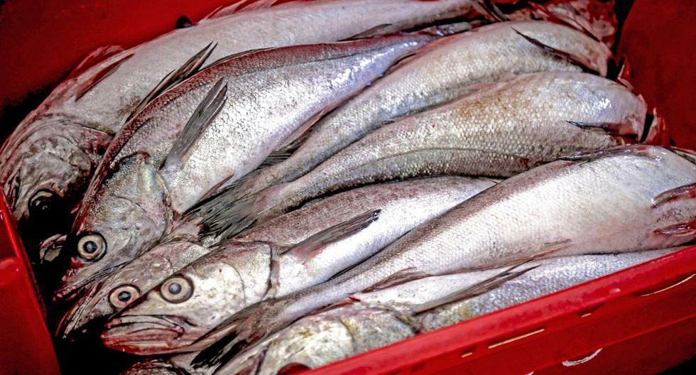 Imarpe recomendó suspender la pesca de merluza por la necesidad de proteger a los juveniles y la biomasa desovante. (Foto: Difusión)