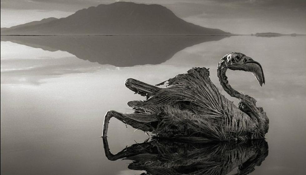 El Lago Natrón, en el norte de Tanzania, convierte animales en estatuas de sal. Aunque esto suene fantástico y siniestro, es una realidad captada por el fotógrafo Nick Brandt, autor del libro Across de Ravaged Land. (Nick Brandt/BBC Mundo)