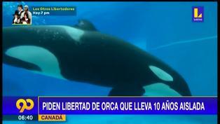 Piden liberar a Kiska, la orca en cautiverio que se golpea contra estanque