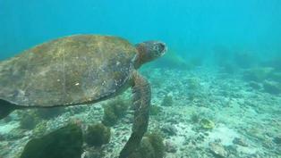 Galápagos: El tesoro natural en lucha contra los microplásticos