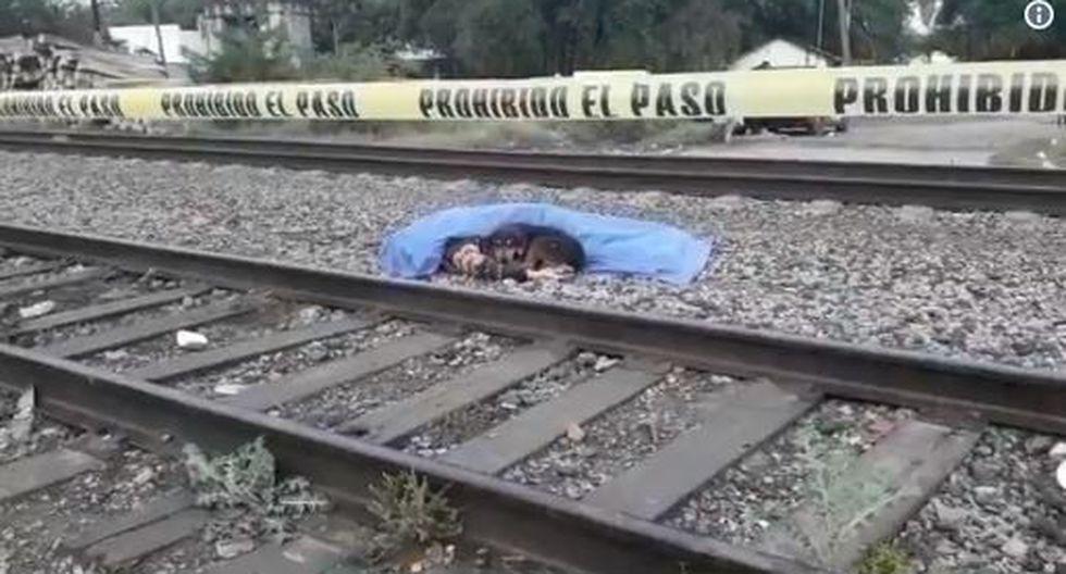 Perro se quedó horas acompañando el cadáver de su dueño atropellado en rieles del tren. (Twitter @yari_trevino)