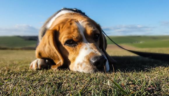 Un perro le demostró de una forma original a su dueña lo decepcionado que estaba de ella. (Foto: Pixabay/Referencial)