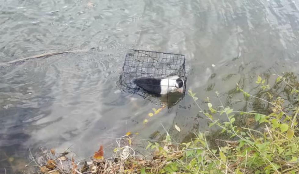 El perro fue encontrado por un pescador que, sin dudarlo, saltó al lago para salvarla. (Foto: Facebook/WCIA 3 News)