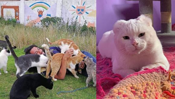 Los últimos días de Mishi Wasi: Albergue para gatos en Cusco es desalojado y necesita nuestra ayuda