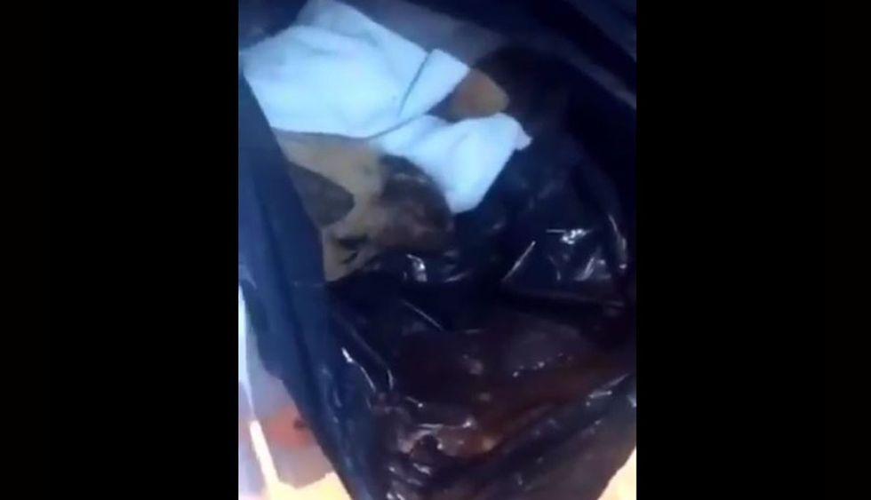 La cabeza de un perro en la refrigeradora. Una de las vecinas del lugar grabó con su celular el macabro hallazgo. (Foto: @jjsolisher)