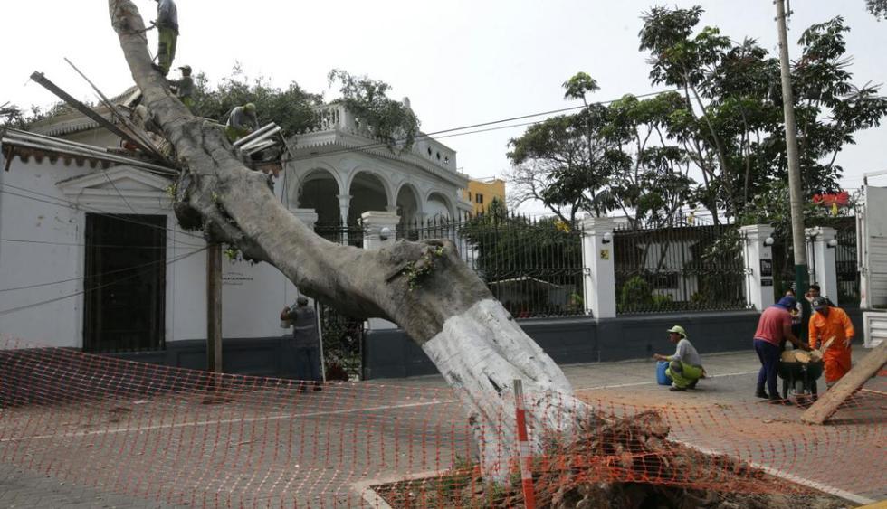 """Barranco: Gerente municipal del distrito afirma que """"es normal que se caigan los árboles"""" (ElComercio)"""