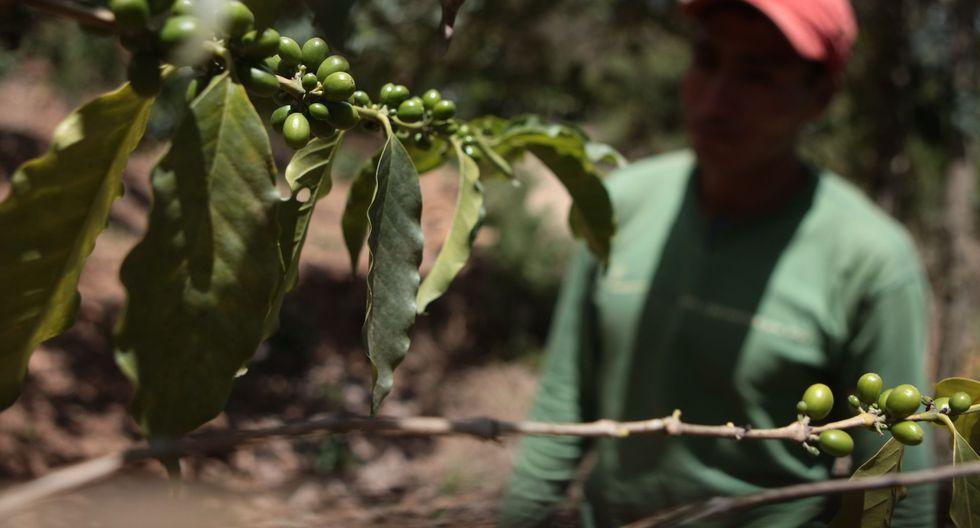 La competencia Taza de Excelencia Perú busca convertir a nuestro país en un productor de café de calidad. (USI)