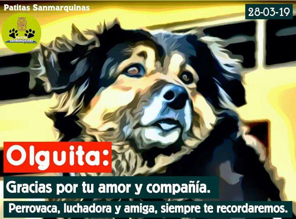Fuente: Patitas Sanmarquinas