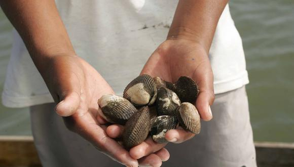 """""""Queremos que respete la veda de estos moluscos, durante este periodo desarrollan sus etapas de reproducción y crecimiento"""", detalló el ministro de la Producción. (GEC)"""