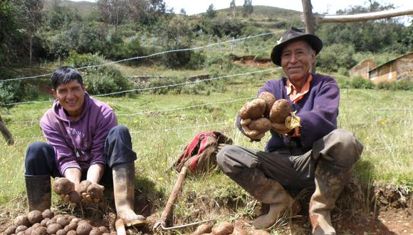 Paro de productores de papa: Publican decreto para que gobiernos regionales compren excedente. (Minagri)