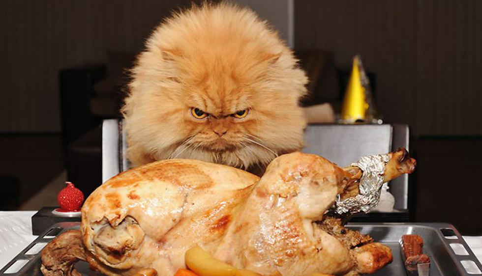 Garfi parece que devorará ese pollo con furia. (Boredpanda.com)