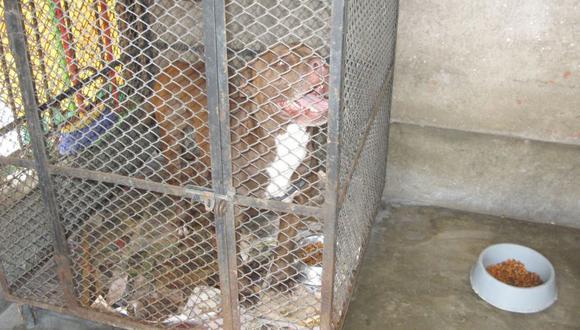 Los perros permanecerán internados por 10 días para descartar si tienen rabia, informó el Ministerio de Salud. (Foto: El Comercio / Referencial)