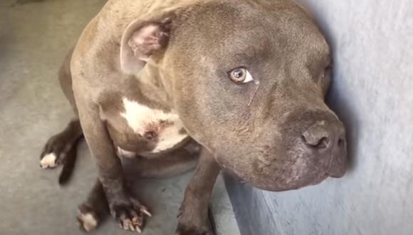El comportamiento del pitbull empezó a cambiar luego que una mujer decidiera acercarse a él para acariciarlo. (Foto: Maria Sanchez presents the pups of SBC Shelter / Facebook)