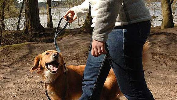 Cuida la salud de tu mascota. (Internet)