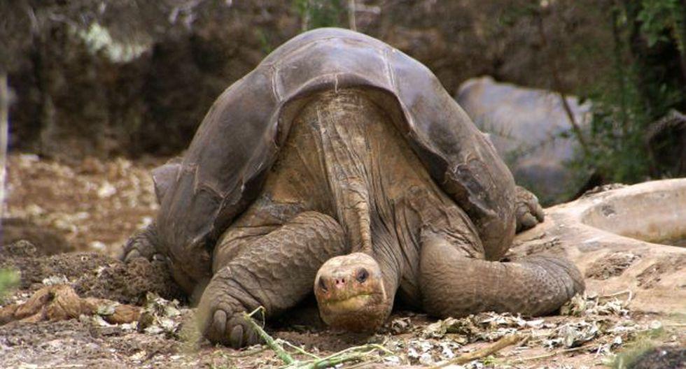 La muerte de la tortuga ha causado gran pesar en los amantes de la naturaleza. (Wikipedia)