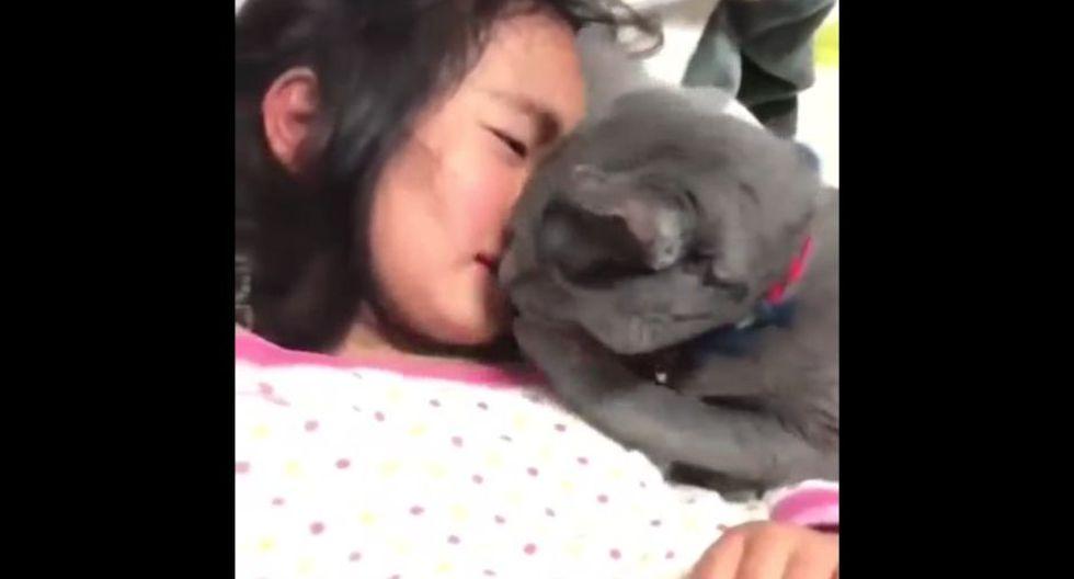 Cientos de usuarios de YouTube quedaron enternecidos tras ver un video que muestra a una niña siendo consolada por un gato.(Captura)