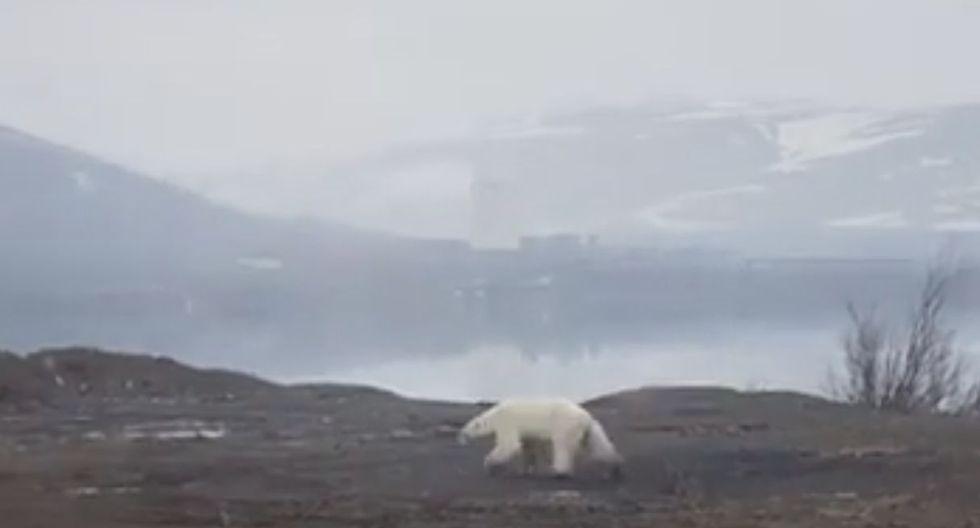 Las incursiones de oso polares que buscan comida son cada vez más frecuentes en el norte de Rusia. (Foto: Captura de video)