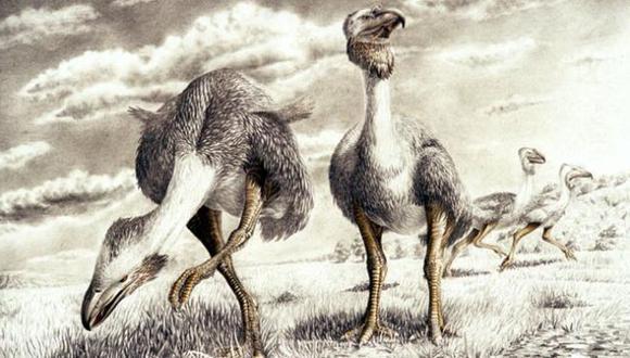 Dibujo muestra a un ave no voladora conocida como ave del terror o Fororracoide. (INACH)