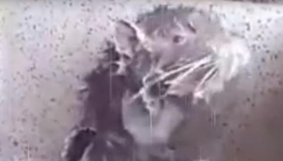 ¿Es en verdad una rata? (Captura YouTube)