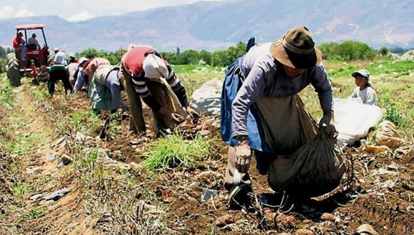 La pequeña agricultura fue la principal beneficiada. (Foto: Andina)