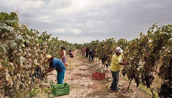"""""""Tanto las evaluaciones externas como la del propio Ministerio (de Agricultura y Riego) encuentran una enorme afectación al sector agropecuario"""", dijo el gobierno. (Foto: GEC)"""