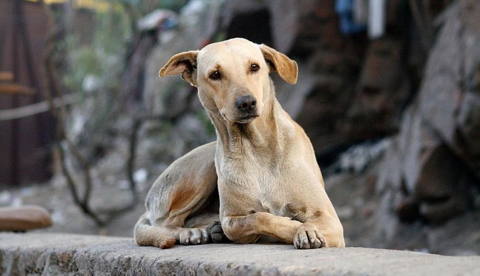 Un especialista precisa cuál cómo evitar la sobrepoblación de perros y gatos en las calles. (Foto: Pixabay)
